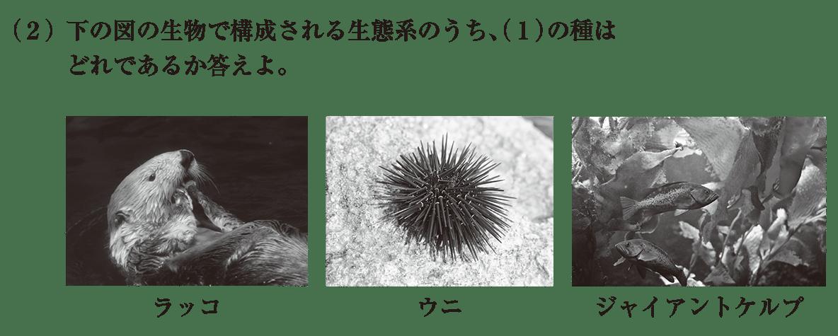 高校 生物基礎 生態系3 練習(2)