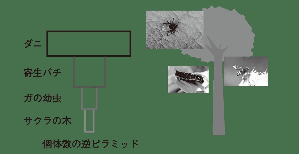 高校 生物基礎 生態系4 ポイント2