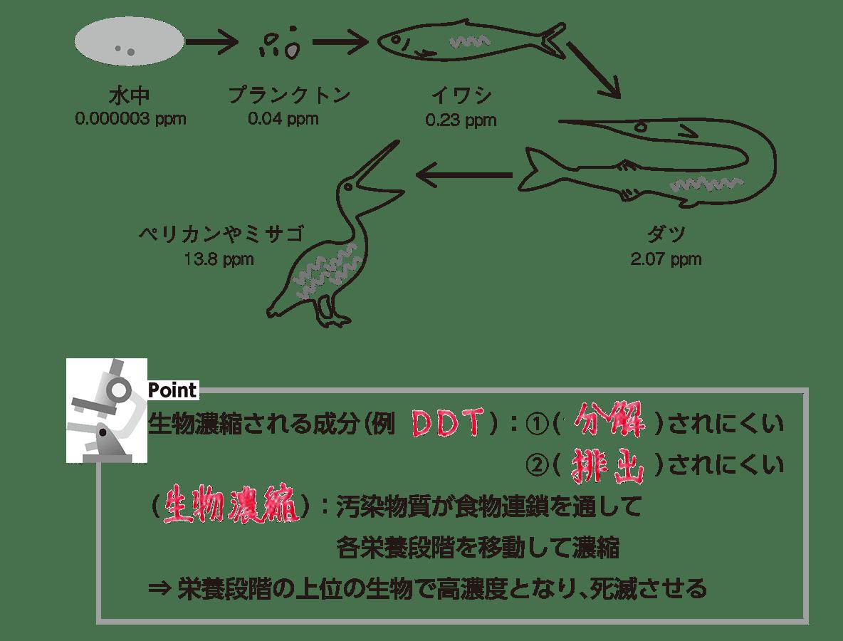 高校 生物基礎 生態系16 ポイント2