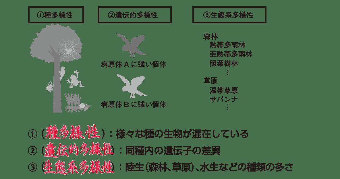 高校 生物基礎 生態系21 ポイント2 左図と、ポイントの1~3行目