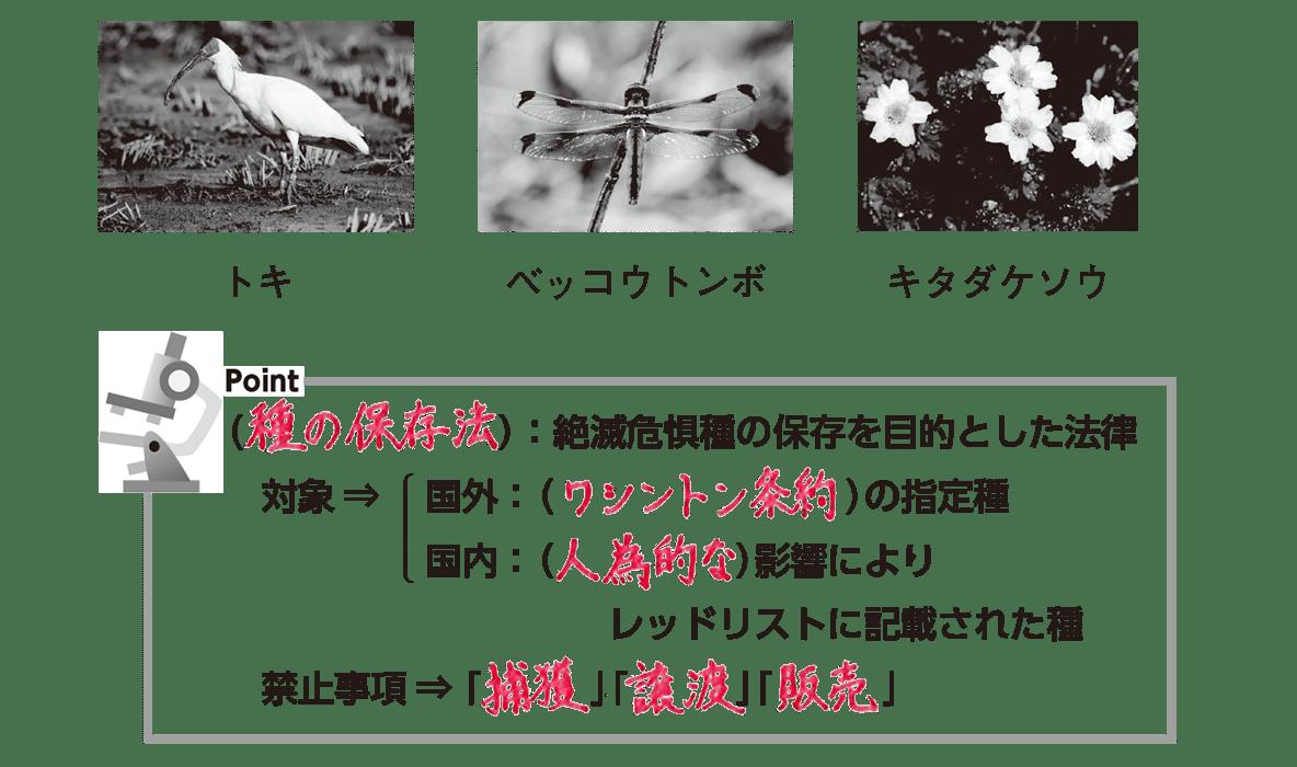 高校 生物基礎 生態系22 ポイント3