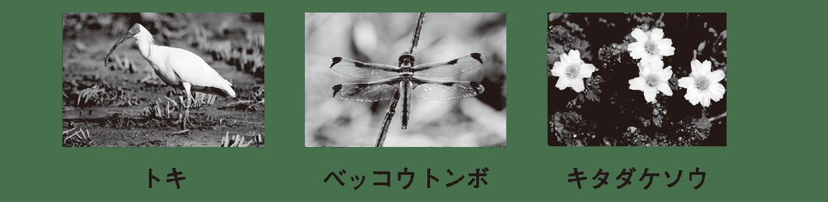 高校 生物基礎 生態系22 ポイント3 写真のみ
