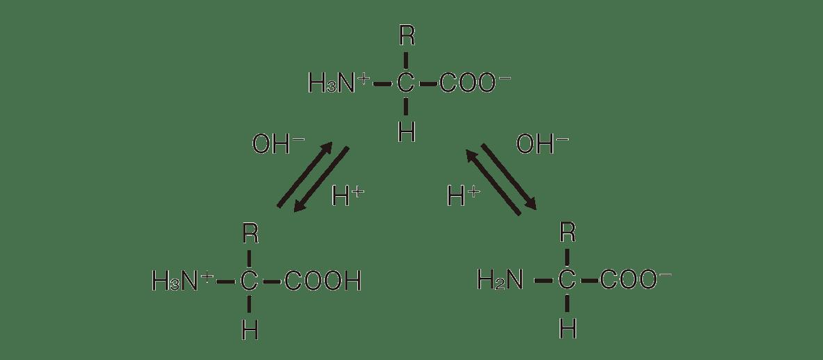 高校 化学 6章 2節 23 2 図のみ、ポイント枠・「双性イオン」・「陽イオン」・「陰イオン」は不要