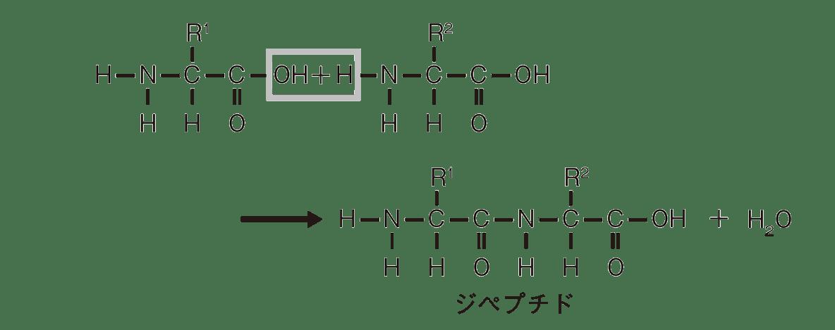 高校 化学 6章 2節 27 1 ポイント2のジペプチドの図のみ