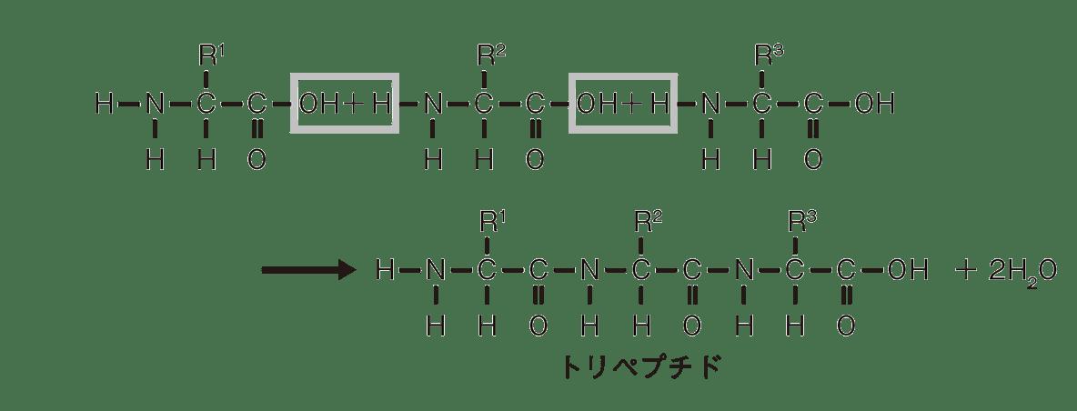 高校 化学 6章 2節 27 1 ポイント2のトリペプチドの図のみ