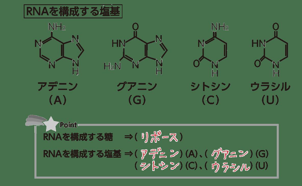 高校 化学 6章 2節 36 1 「RNAを構成する塩基」すべて、答えあり