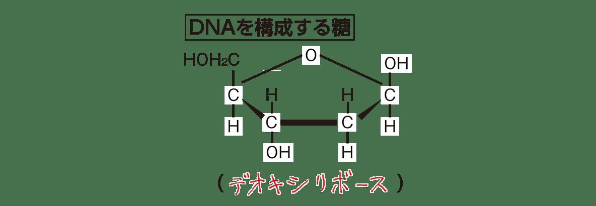 高校 化学 6章 2節 36 2 「DNAを構成する糖」すべて、答えあり