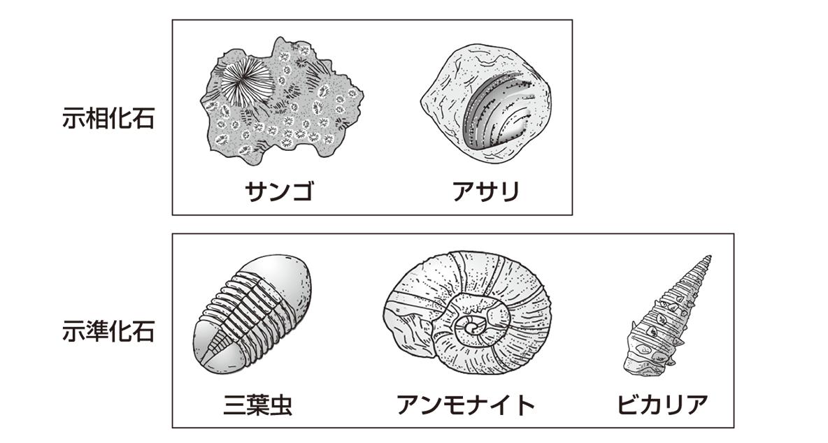 テスト記事 中1 理科9 様々な化石
