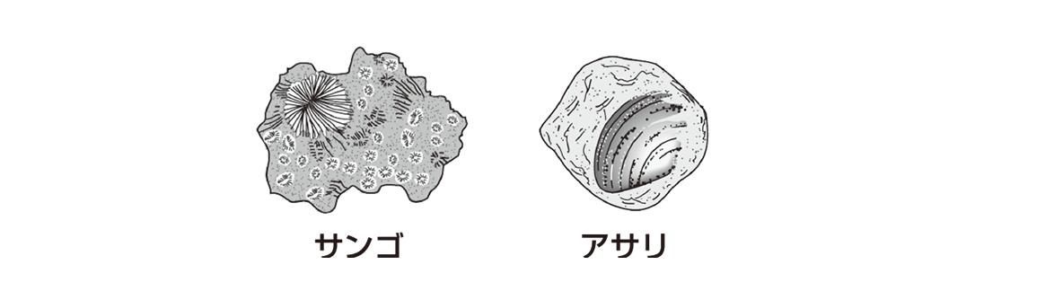 テスト記事 中1 理科9 示相化石