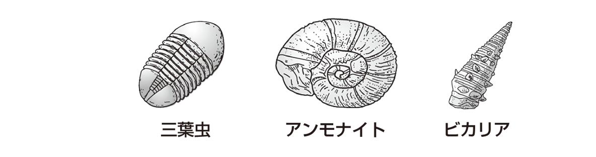 テスト記事 中1 理科9 示準化石