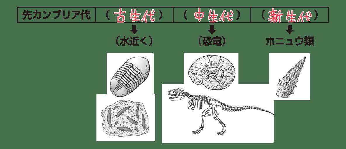 テスト記事 中1 理科9 示準化石と時代区分